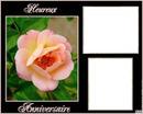 Anniversaire Rose rose 2 cadres
