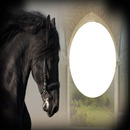 amour des chevaux