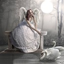 anges 2