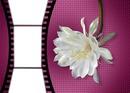 photos fleurs