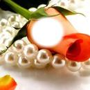 tu eres mi perla rosa