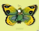 bébé papillon 2