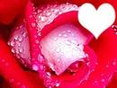 fleur d amour