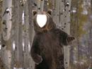 oso en sordo gordo