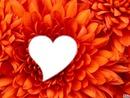 fleur  coeur LOVES