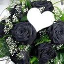 roses noire