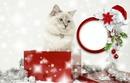 Chat dans un paquet de noël