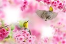 tavasz táj madarakkal