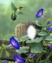 Cc campanillas y colibrí
