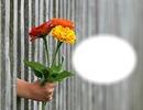 Bouquet de fleurs-cadeau-donner