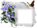 Fleur mauve-papillon-parchemin