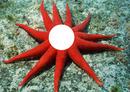 étoile des mers