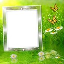 Frame Flowers and butterfly