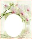 Orchidée blanc