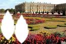 ***Versailles Coté Jardin***