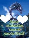 anniversaire dauphin