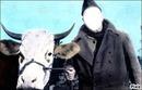 la vache & le prisonnier