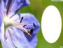 Fleur violette de profil