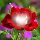 mis rosas JS