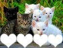 6 chatons
