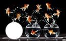 *Comme un poisson dans l'eau.....*