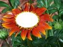 Fleur d'été