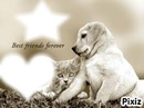 dog and cats my best friends forever