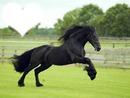 cheval de coeur