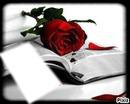 fleur d'amour