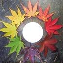 Feuilles d'automne (cercle)