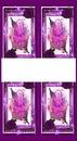 4 photos identiques