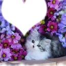 chatons bonne nuit