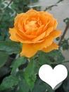 Rosa Naranja