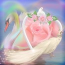 renewilly cisne paloma y rosa