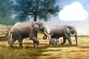 famille d'elephants