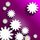 6 foto's bloemen