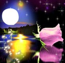 Rose et coucher de soleil