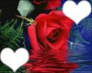 fleur qur l'eau