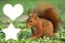 le petit écureuil !!