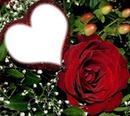Tierno corazón con rosa