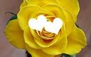 2 coeurs rose jaune