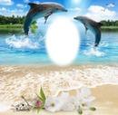 Julita02 Delfines
