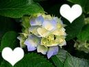 une fleur peux changer une vie
