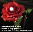 rosa enamorada