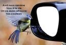 l'oiseau et le rétro