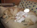 niño durmiendo en perro