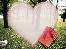 лес сердце