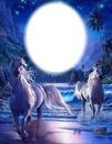 Chevaux blancs - clair de lune