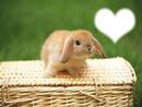 el amor del conejito
