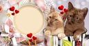 Chats dans une tasse
